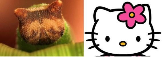 Hello Kitty  юунаас санаа авсан бэ?