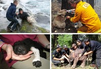 Амьтдыг аварч буй сэтгэл хөдлөм агшнууд /фото/