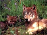 Амьтдын гайхалтай фото агшин ...