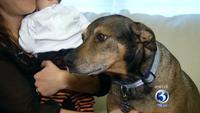 Нохой эзнийхээ бяцхан үрийн амийг аварчээ