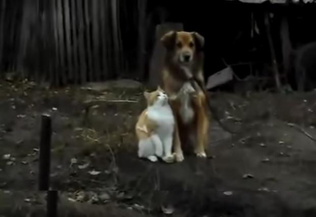 Муур, нохой хоёр зураг даруулахаар ихэд хичээсний дараа...