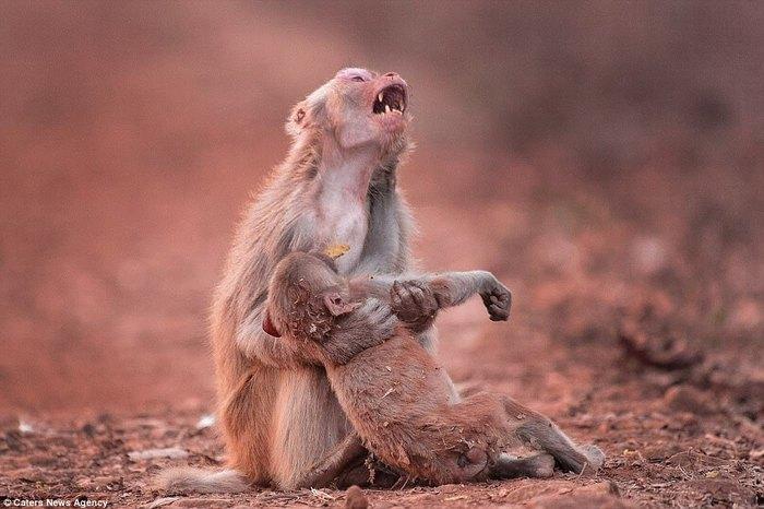 Эх сармагчингийн зовлон шаналал дүүрэн төрх