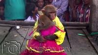 Хуримын бөгж, лимузинтэй сармагчны хурим
