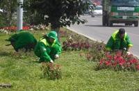 Нийслэлийн цэцэрлэгчид Япон улсад мэргэжил дээшлүүлнэ