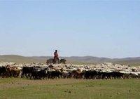 Хятадад мал маллахаар очсон монголчуудыг зодон гэмтээжээ