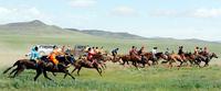 Хурдан морийг эрлийз, монголоор нь биш мэргэжлийн, сонирхогчийн гэж ялгадаг болъё