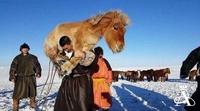 Зөвхөн Монголд л харж болох хөгжилтэй дүр зургууд №3