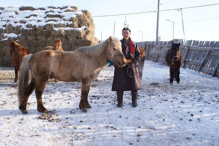 Монгол Улсын алдарт уяач Ц.Цэрэнбал: Хурдлах морины зоон дээрээс туяа цацардаг