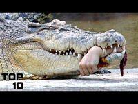 Амьтны хүрээлэнгийн аймшигт ослууд /бичлэг/