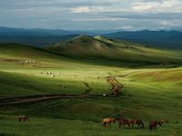 Абердины их сургууль сүү, сүү бүтээгдэхүүн монголчуудад хэрхэн нөлөөлсөн талаар судалж байна