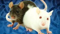 АТМ дахь мөнгөн тэмдэгтийг хулгана устгажээ